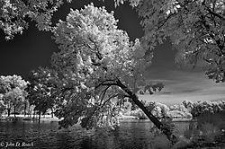 Tilted_Tree_at_the_Lagoon-2.jpg