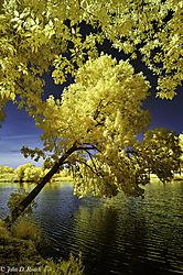 Tilted_Tree_at_the_Lagoon-3.jpg
