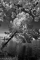 Tilted_Tree_at_the_Lagoon-4.jpg