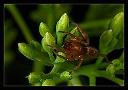 Tiny-Spider-e.jpg