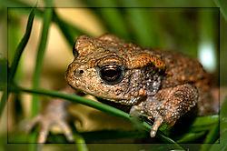 Toad-_2.jpg