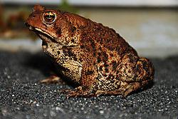 Toad11.jpg
