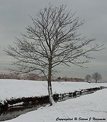 Tree-Old-Beach-Road.jpg