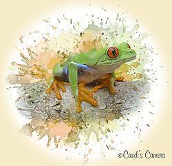 Tree_Frog_Splash_2.jpg
