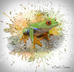 Tree_Frog_Splash_layers_copy.jpg
