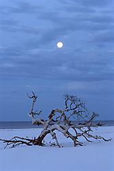 Tree_Of_Light.jpg