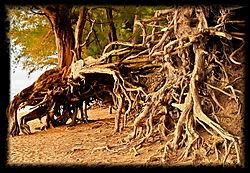 Tree_Roots-2.jpg