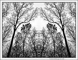 Tree_Silhouette_10029.jpg