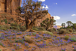 Tree_Wildflowers_1_NIK.jpg