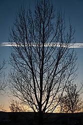 Tree_sunset_edited-1.jpg