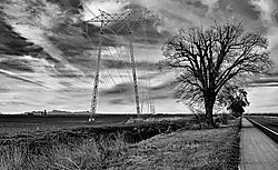 Trees-And-Towers--on-CA-State-99_PPW_038-BW.jpg