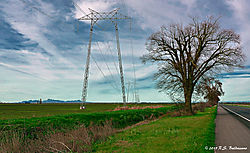 Trees-And-Towers--on-CA-State-99_PPW_038.jpg
