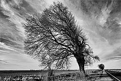 Trees-On-99_046_PPW-BW.jpg