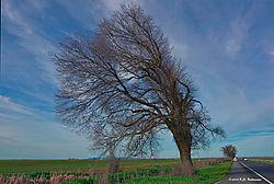 Trees-On-99_046_PPW.jpg