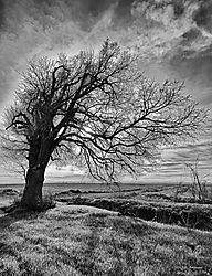 Trees-On-99_051_PPW-BW.jpg