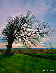 Trees-On-99_051_PPW.jpg