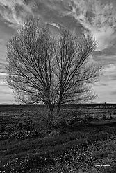 Trees-on-CA-State-99--No-49_PPW-BW.jpg
