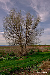 Trees-on-CA-State-99--No-49_PPW.jpg