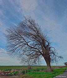 Trees-on-CA-State-99_PPW_055.jpg