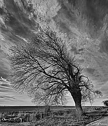 Trees-on-CA-State-99_PPW_055_BW.jpg