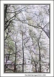 Trees_8685.jpg