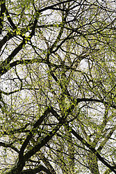 Treescape_1.jpg