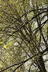 Treescape_3.jpg