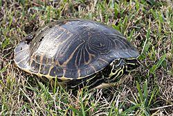 Turtle-111.jpg