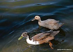 Two-Birds-in-Blue-Green-Waters-PPW.jpg