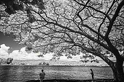 UNDER_A_SHADE_TREE.JPG