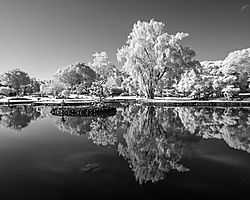 UPON_REFLECTION_0036.jpg