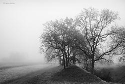 Valley_Oaks_and_Tule_Fog_8_San_Joaquin_Valley_copy.jpg