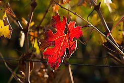 Vineyard-Road-Autumn-Shots_.jpg