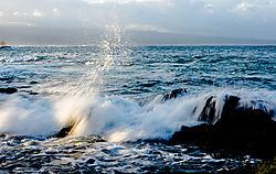 WAVE-1284.jpg