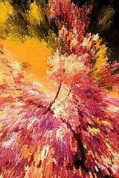 WILD_TREE_0604.jpg