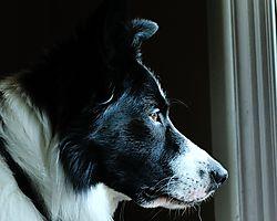 WYN_watching_Deer_9_19_12_5986.jpg