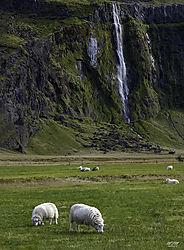 Waterfall_Sheep.jpg