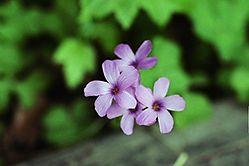 Wild_Flower.JPG