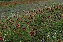 Wildflowers_20200322-0016.jpg