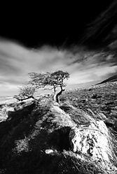Wind_Wuthering3.jpg
