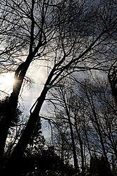 WinterSunTrees.JPG