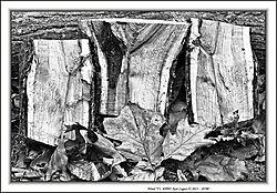 Wood_Ys_9993.jpg
