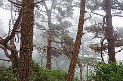 Woods_2007.jpg