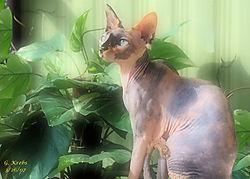 Wrinkled_Kitty_Frame_1.jpg