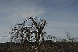 YBO2864_The_tree.jpg