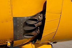 Yellow_AWM_6605_.jpg