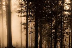 Yosemite4.jpg