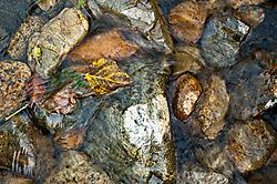 Yosemite_Creek-3478.jpg