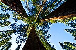Yosemite_Fall_Giants.jpg