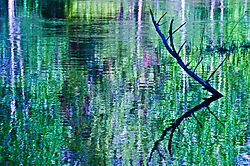 Yosemite_Spring_Reflections.jpg